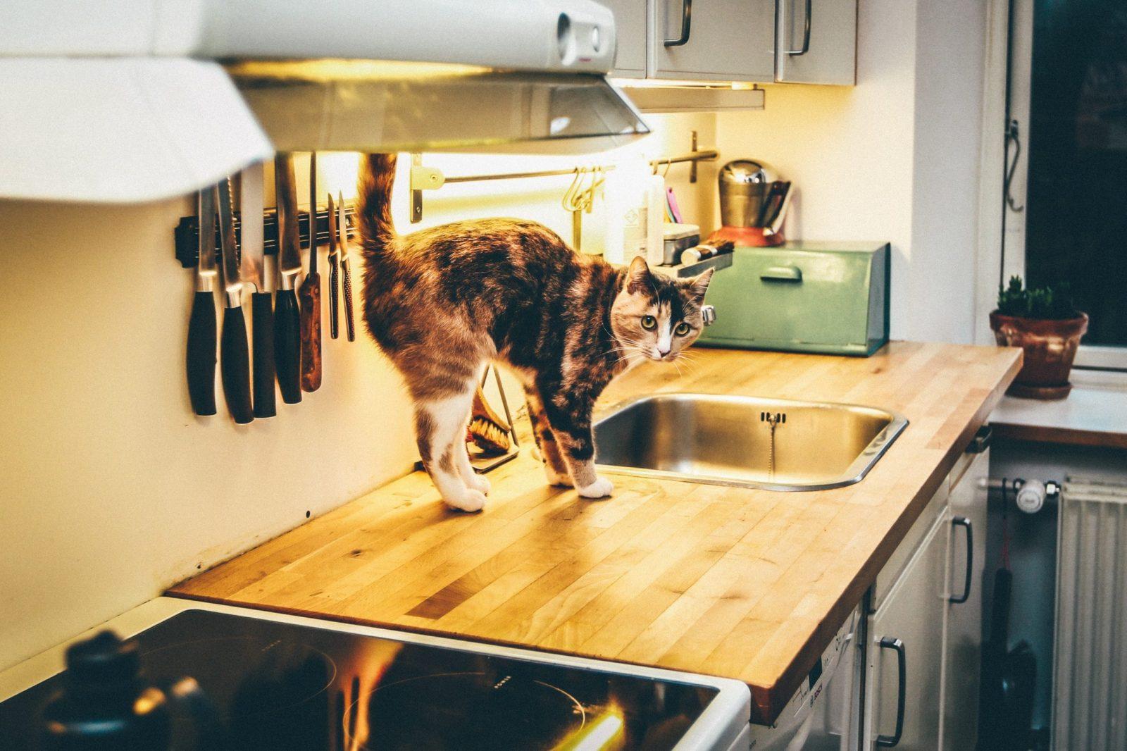 Kitchen Sink Research